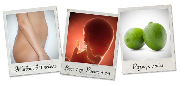 показатели на 11 неделе беременности