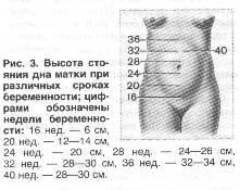 Размеры матки по неделям беременности