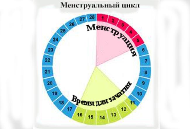Самый большой менструальный цикл