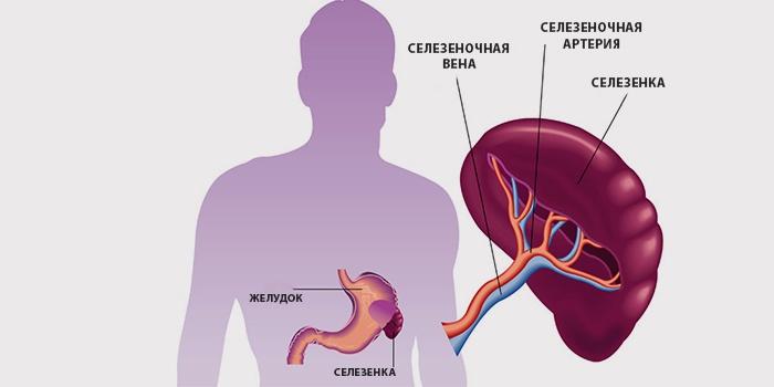 Общий анализ крови при увеличенной селезенке Медицинская карта ребенка Энергетический проезд
