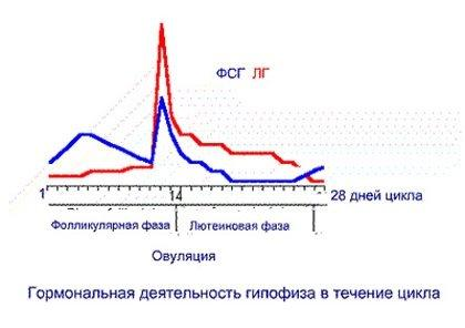 таблица соотношения гормонов