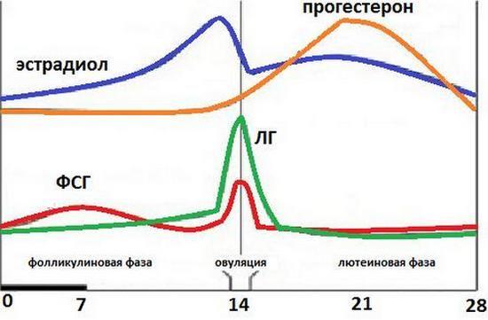 Соотношение гормонов в третий день