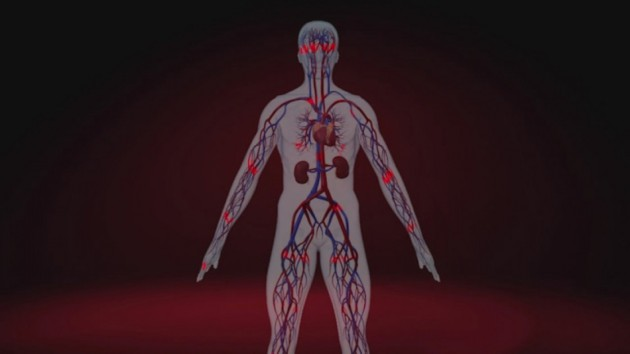 Кровеносная система человека на фоне