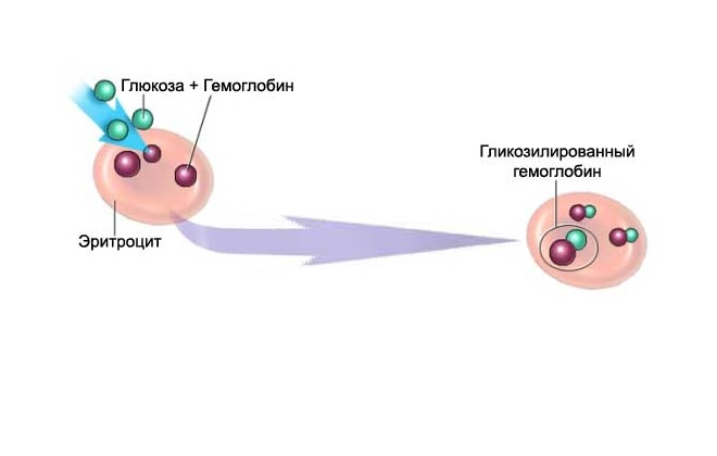 Гликозилированный гемоглобин картинки