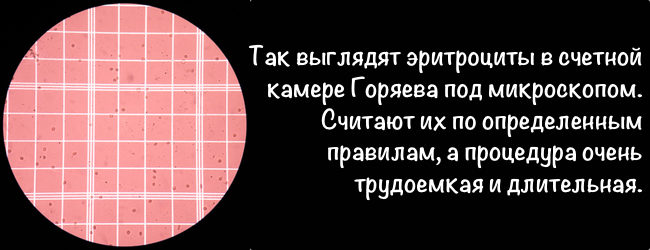 эритроциты камера Горяева