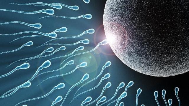 uvelichivaet-podvizhnost-spermotozoidov